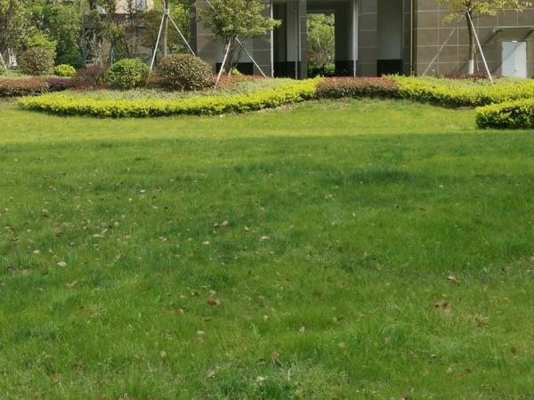太仓市区 雨润华府 五洋广旁 品质小区 绿化高 配套成熟 实验中学 朱莉小学