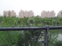 绿地别墅 超大院子 满2年 407平前后花园地下室 实用面积800平